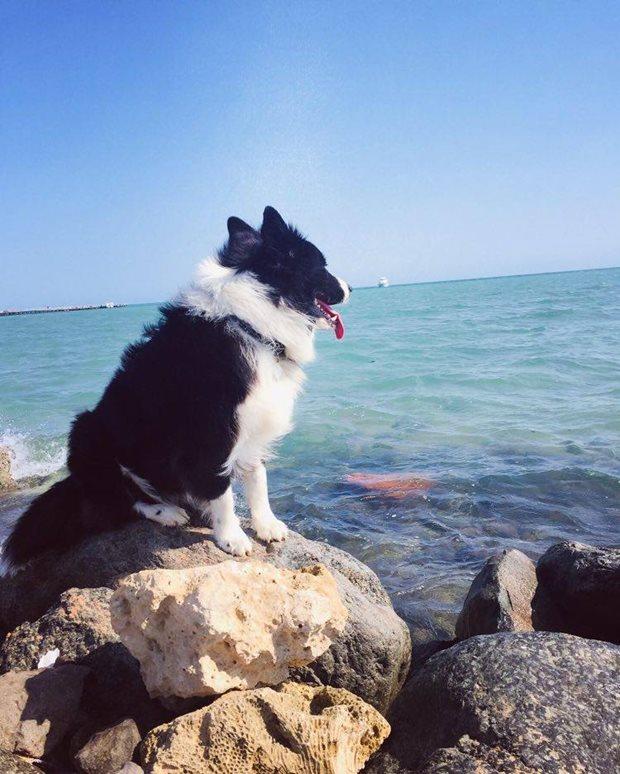 Jak se neztratit na moři - kiting na moři - čeká na pána