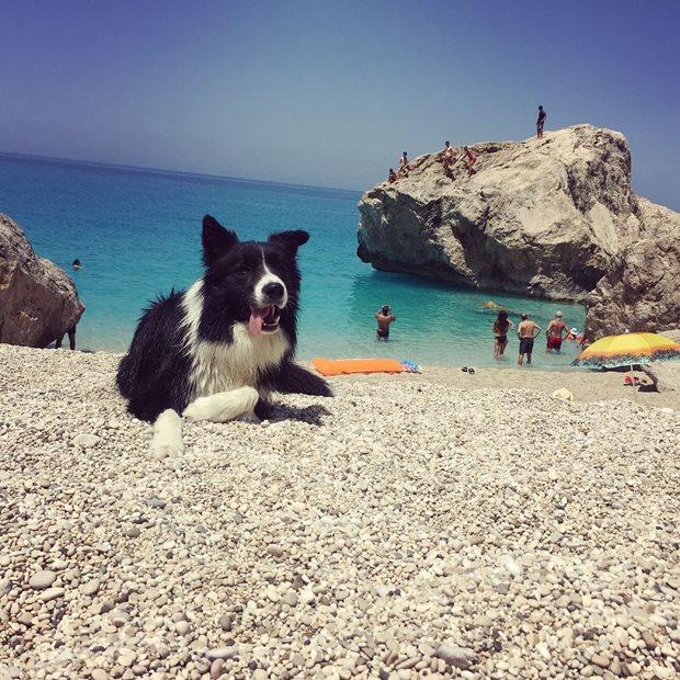 Kiting a Pes - opalovačka na pláži