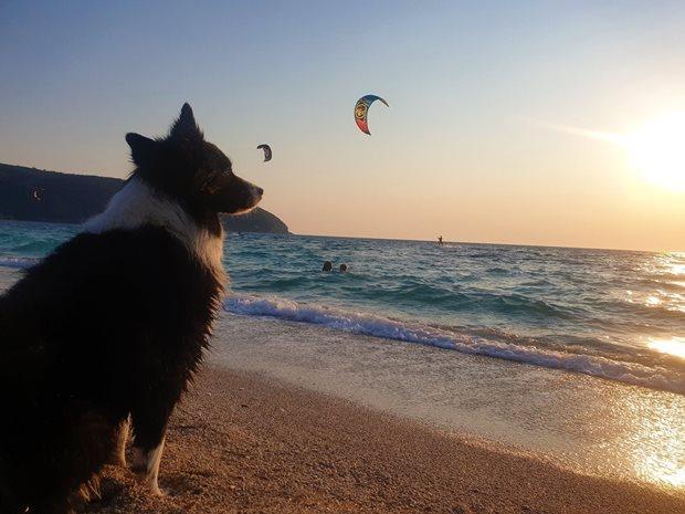 Kiting a pes - Angie čeká na pláži