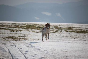 Snowkiting - okolo komína